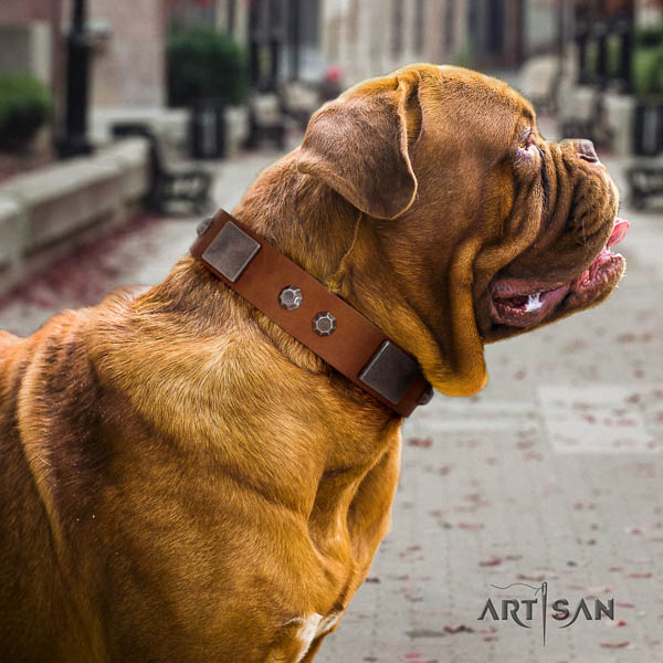 Dogue de Bordeaux incredible natural genuine leather dog collar