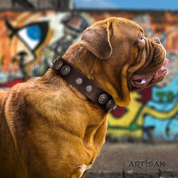 Dogue de Bordeaux dog collar of significant quality leather for fancy walking