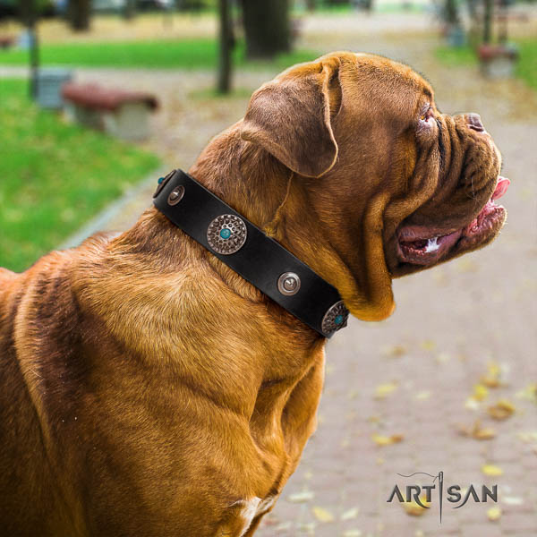 Dogue de Bordeaux fancy walking dog collar of fashionable leather