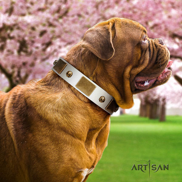 Dogue de Bordeaux fancy walking dog collar of incredible quality genuine leather