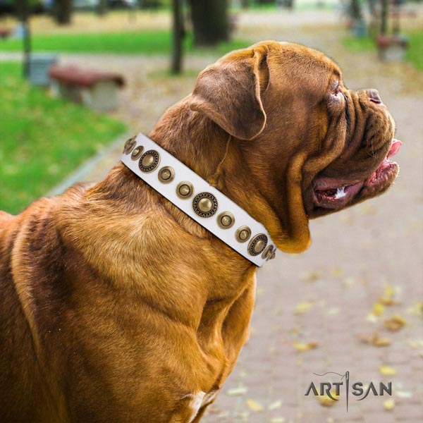 Dogue de Bordeaux studded full grain natural leather collar with corrosion proof traditional buckle