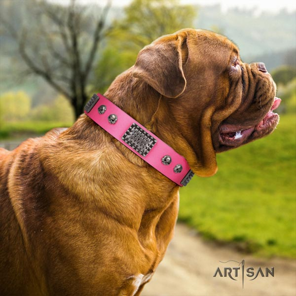 Dogue de Bordeaux fashionable leather collar for basic training