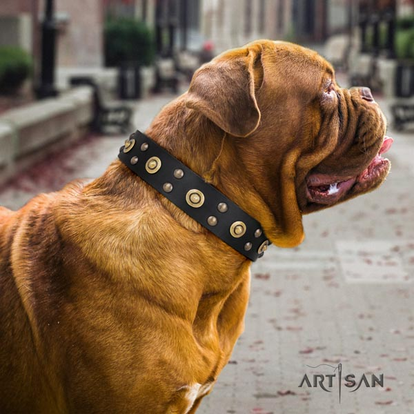 Dogue de Bordeaux incredible full grain genuine leather collar for easy wearing