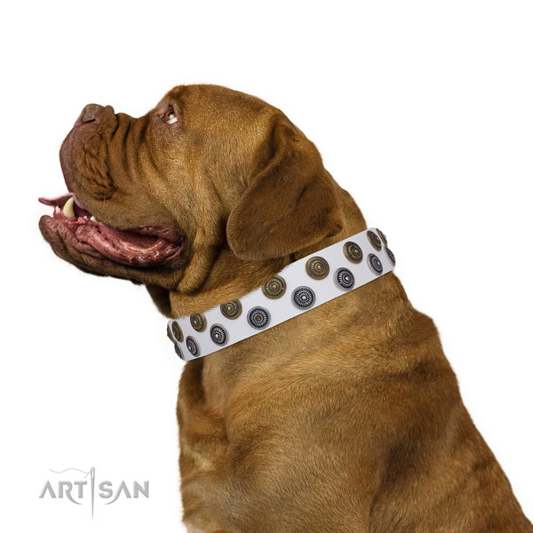 Dogue de Bordeaux genuine leather collar with reliable traditional buckle for handy use