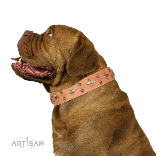 Dogue de Bordeaux full grain genuine leather collar with corrosion resistant fittings for comfortable wearing