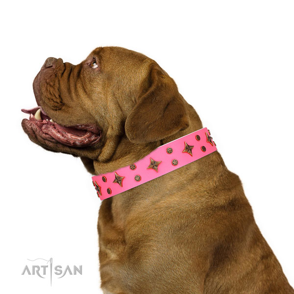 Dogue de Bordeaux full grain leather collar with strong buckle for easy wearing