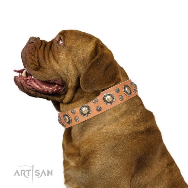 Dogue de Bordeaux full grain natural leather collar with strong hardware for basic training