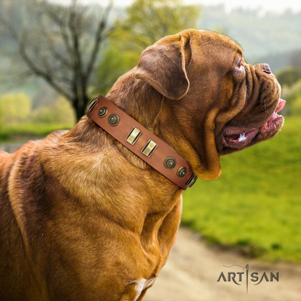 Dogue de Bordeaux exquisite full grain leather collar for everyday use
