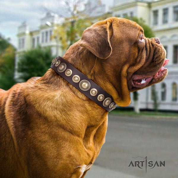 Dogue de Bordeaux embellished full grain genuine leather collar with reliable fittings