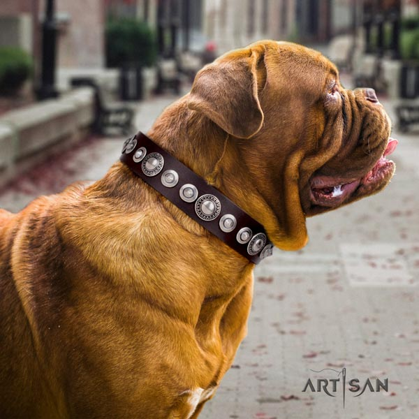 Dogue de Bordeaux studded leather collar with rust resistant buckle