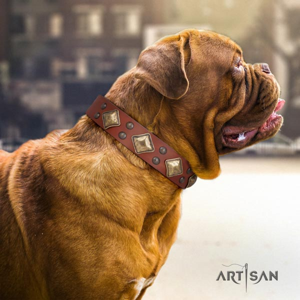 Dogue de Bordeaux remarkable full grain leather collar for comfortable wearing