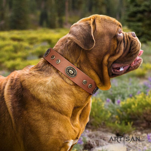 Dogue de Bordeaux embellished full grain leather collar with durable traditional buckle
