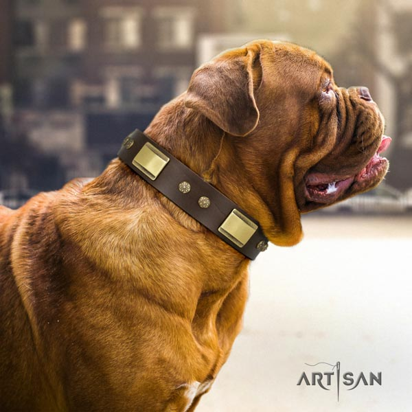 Dogue de Bordeaux exceptional full grain natural leather collar for daily use