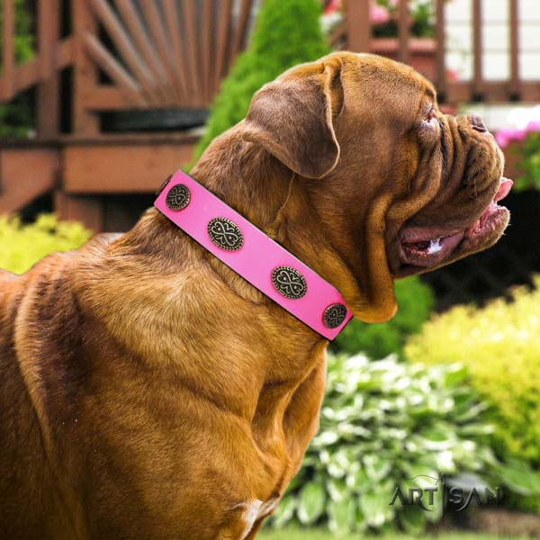 Dogue de Bordeaux unusual leather collar for everyday walking