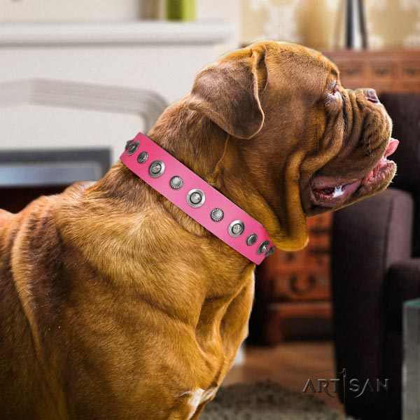 Dogue de Bordeaux remarkable full grain leather collar for everyday walking