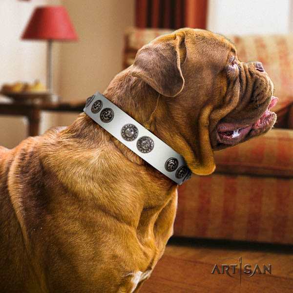 Dogue de Bordeaux comfy wearing dog collar of remarkable quality natural leather