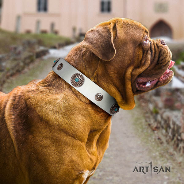 Dogue de Bordeaux stylish walking dog collar of trendy leather