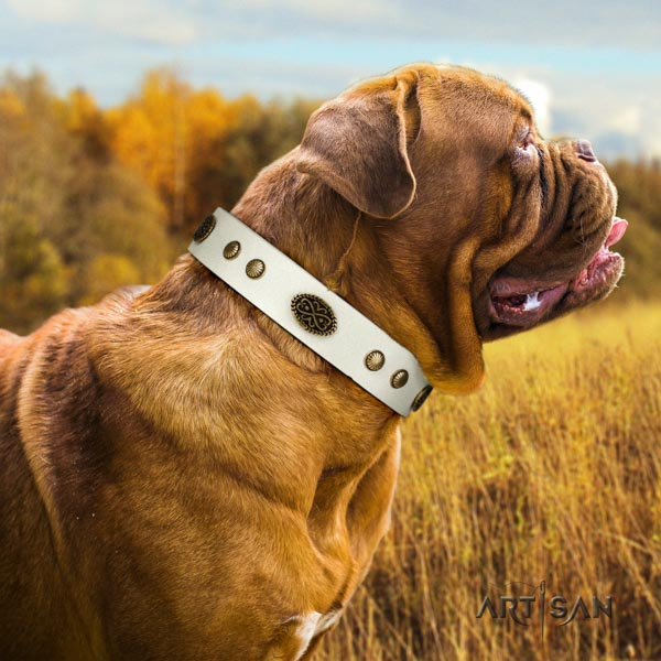 Dogue de Bordeaux trendy full grain genuine leather collar for walking