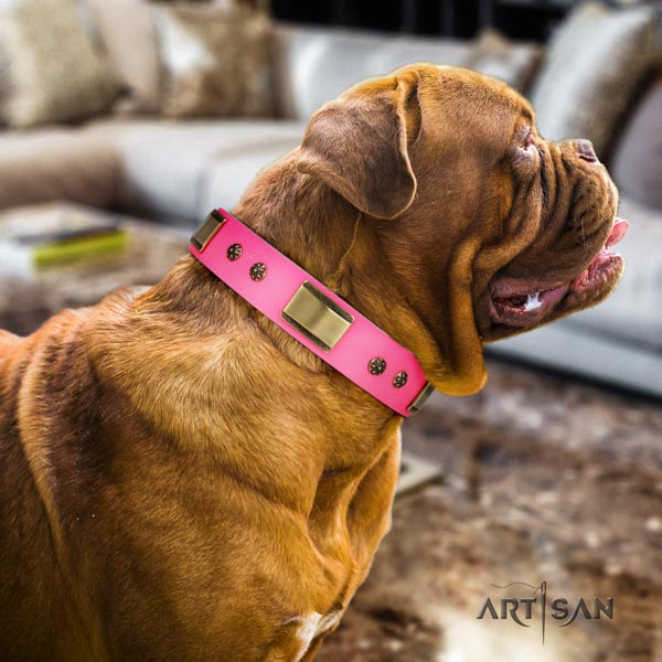 Dogue de Bordeaux fashionable full grain natural leather collar for everyday walking