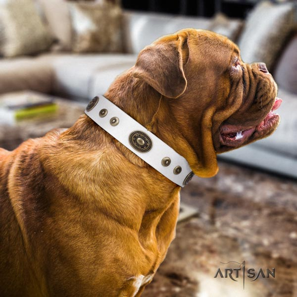 Dogue de Bordeaux studded natural genuine leather collar with reliable fittings
