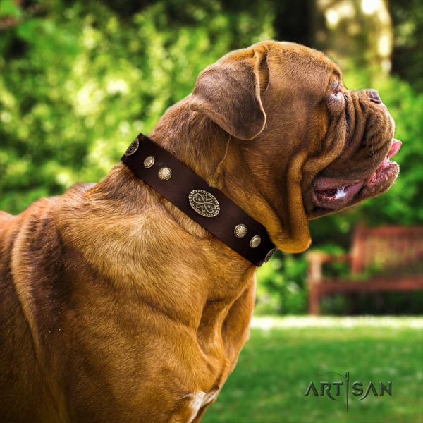 Dogue de Bordeaux significant full grain leather collar for walking