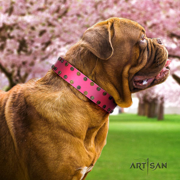 Dogue de Bordeaux fancy walking dog collar of top quality natural leather