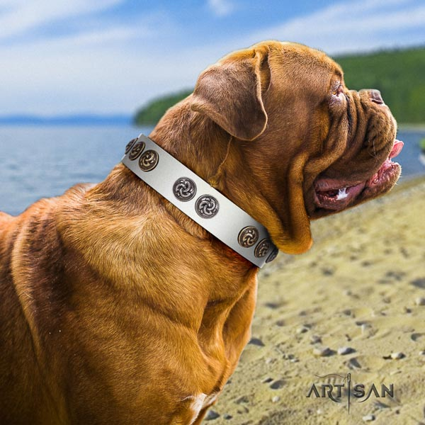 Dogue de Bordeaux unusual natural genuine leather dog collar