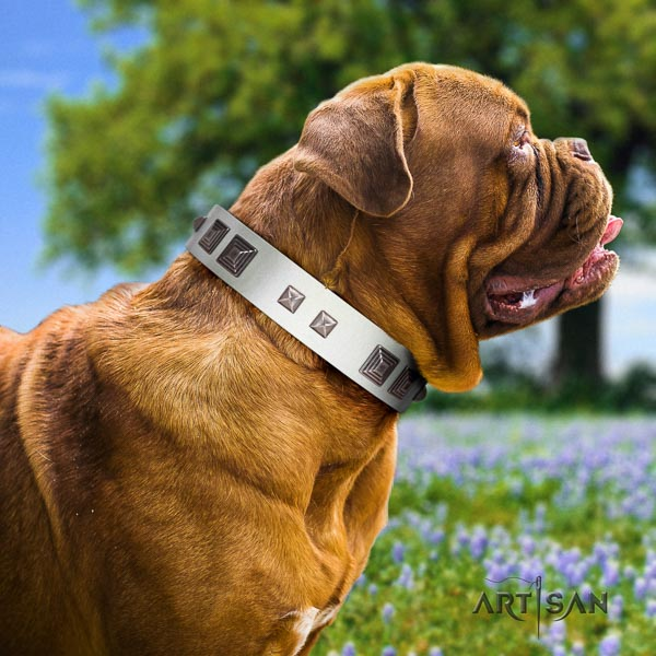 Dogue de Bordeaux stylish walking dog collar of significant quality natural leather