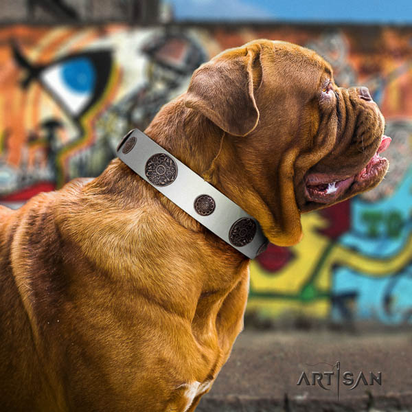 Dogue de Bordeaux comfortable wearing dog collar of comfortable natural leather