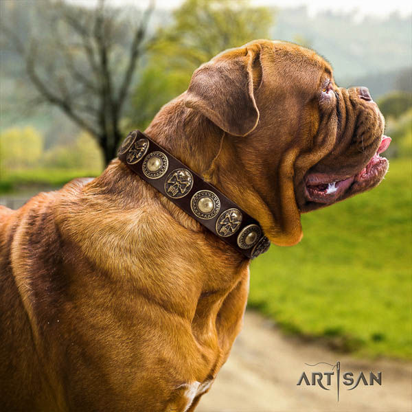 Dogue de Bordeaux easy wearing dog collar of incredible quality natural leather