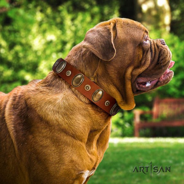Dogue de Bordeaux everyday walking dog collar of significant quality genuine leather