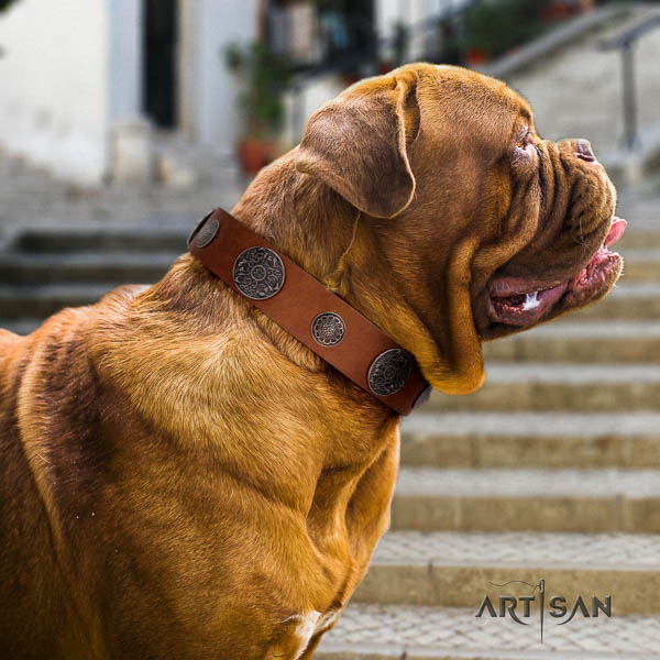 Dogue de Bordeaux basic training dog collar of significant quality natural leather