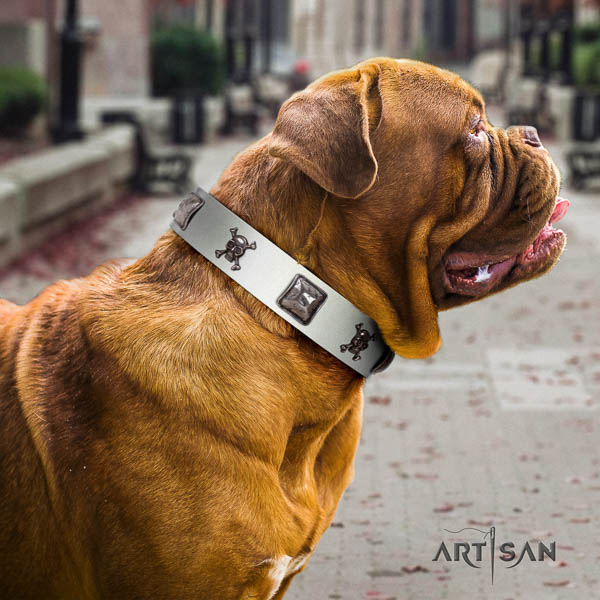 Dogue de Bordeaux comfy wearing dog collar of exquisite quality natural leather