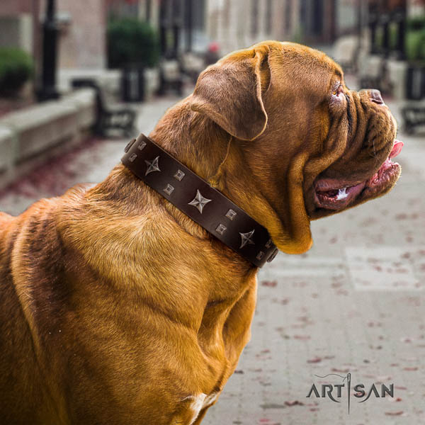 Dogue de Bordeaux dog collar of incredible quality genuine leather for comfy wearing
