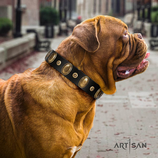 Dogue de Bordeaux walking dog collar of exceptional quality natural leather