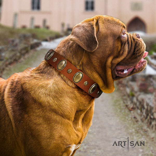 Dogue de Bordeaux walking dog collar of significant quality natural leather