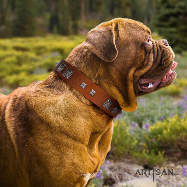 Dogue de Bordeaux comfy wearing dog collar of soft genuine leather
