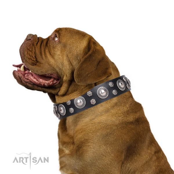 Dogue de Bordeaux genuine leather collar with corrosion resistant fittings for walking