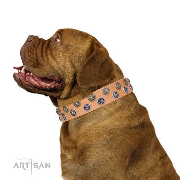 Dogue de Bordeaux genuine leather collar with corrosion resistant D-ring for everyday use