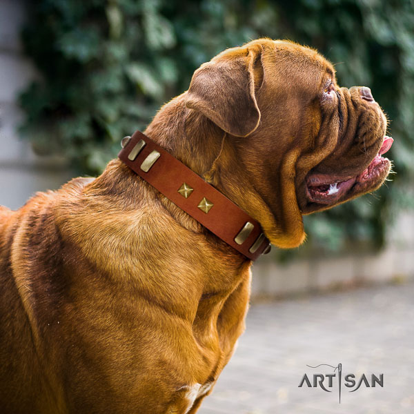 Dogue de Bordeaux everyday walking dog collar of significant quality natural leather
