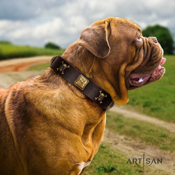 Dogue de Bordeaux comfy wearing dog collar of top notch quality leather