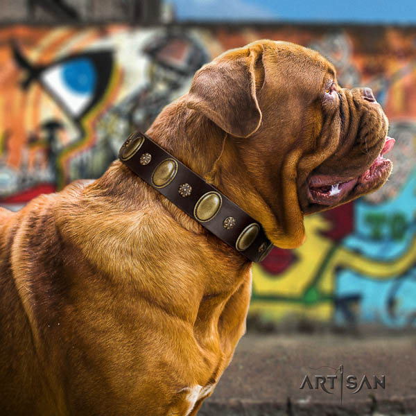 Dogue de Bordeaux fancy walking dog collar of fashionable natural leather
