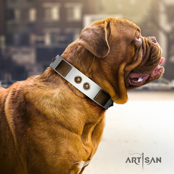 Dogue de Bordeaux comfortable wearing dog collar of fine quality natural leather