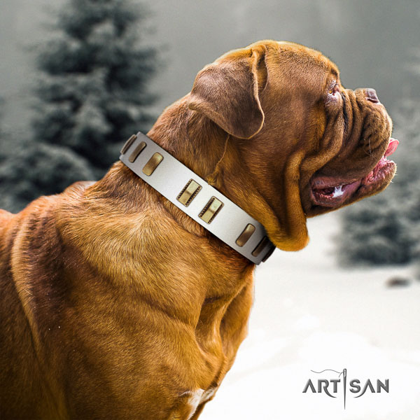 Dogue de Bordeaux daily use dog collar of trendy genuine leather