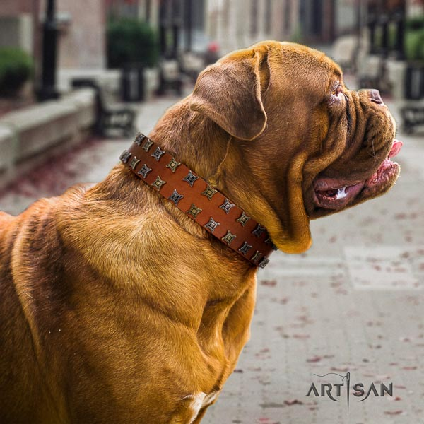 Dogue de Bordeaux basic training dog collar of flexible leather