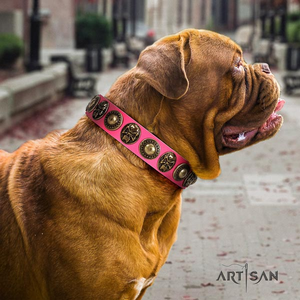 Dogue de Bordeaux everyday walking dog collar of trendy natural leather