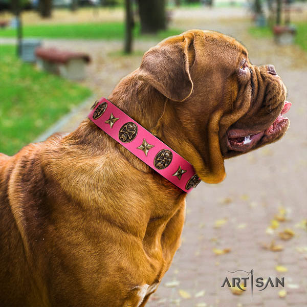 Dogue de Bordeaux stylish walking dog collar of remarkable quality natural leather