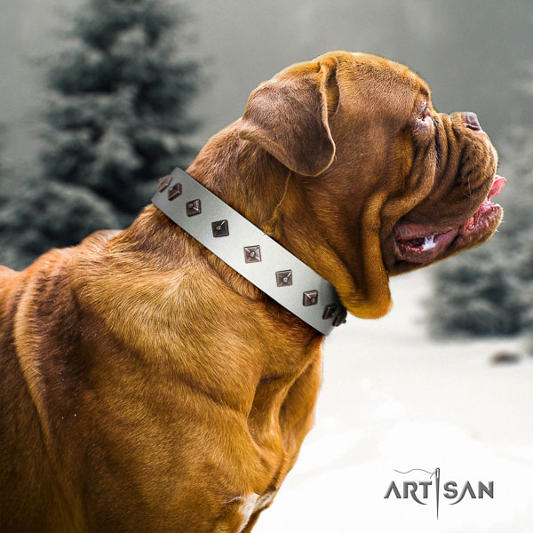 Dogue de Bordeaux extraordinary leather dog collar