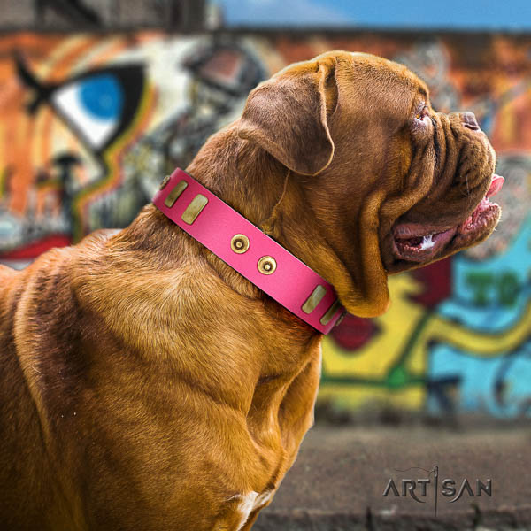 Dogue de Bordeaux everyday walking dog collar of designer leather