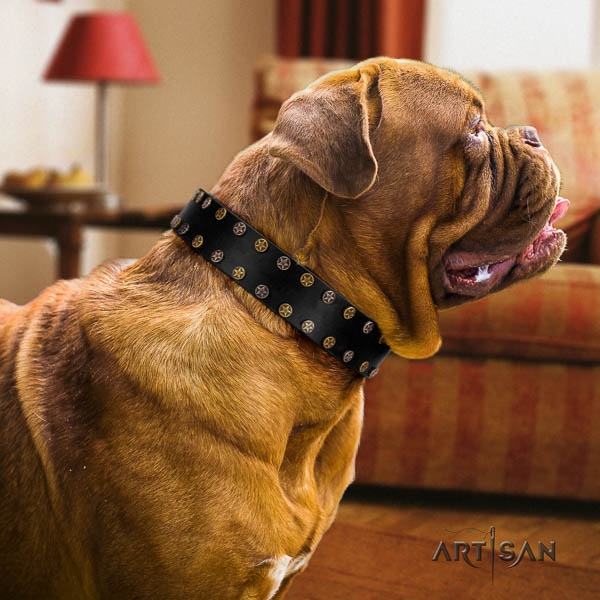 Dogue de Bordeaux daily use dog collar of designer leather
